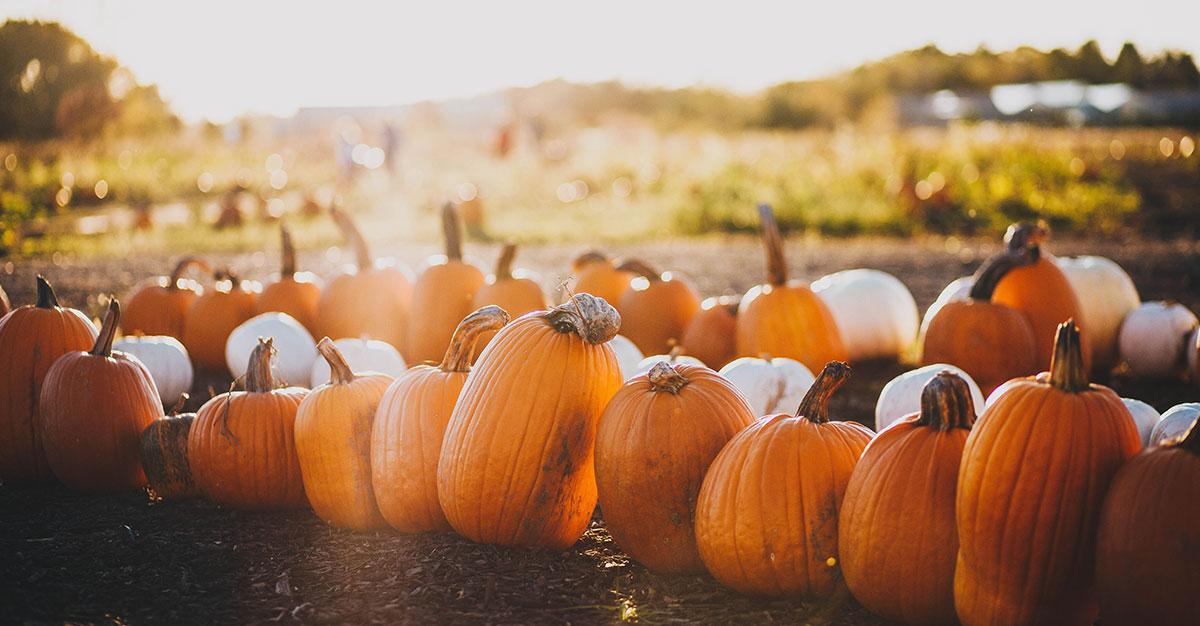 5-Autumn-Harvest